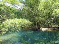 Jamaika-YS_Wasserfaelle-Park-2