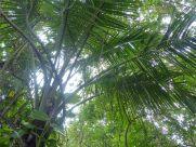Karibik-St_Kitts-Plantage_Wingfield-Dschungel-3