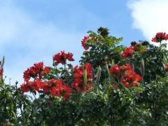 Karibik-St_Kitts-Romney_Manor-Botanischer_Garten-1