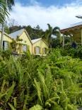 Karibik-St_Kitts-Romney_Manor-Botanischer_Garten-4