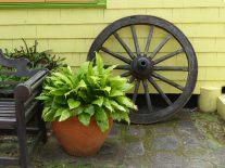 Karibik-St_Kitts-Romney_Manor-Botanischer_Garten-6