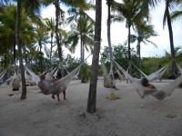 mexiko-xel_ha-haengematten-palmen-2