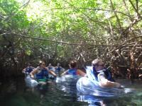 mexiko-xel_ha-tubes-fluss-mangroven-1