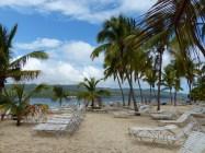 Samana-Cayo_Levantado-Bacardi_Insel-Strand-Palmen-3