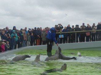 Texel-De_Koog-ecomare-Seehund-Fuetterung-1