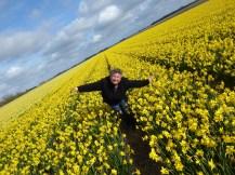 Texel-Narzissenfeld-gelb-wir-3
