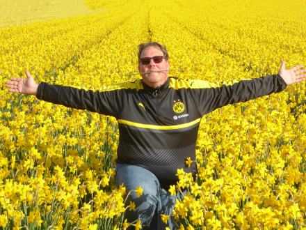 Texel-Narzissenfeld-gelb-wir-4