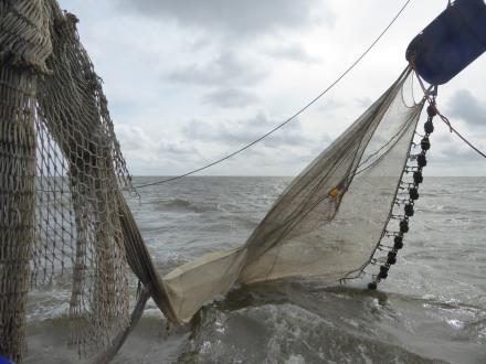 Texel-Oudeschild-Kutterfahrt-Fischfang-2