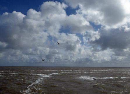 Texel-Oudeschild-Meer-2