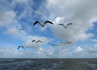 Texel-Oudeschild-Seehundfahrt-Moewe-2