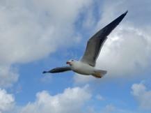 Texel-Oudeschild-Seehundfahrt-Moewe-4