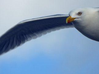 Texel-Oudeschild-Seehundfahrt-Moewe-6