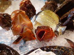 Spanien-Palamos-Fischmarkt-Fisch-5
