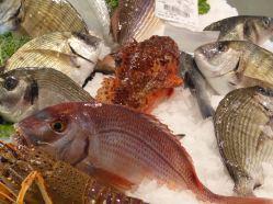 Spanien-Palamos-Fischmarkt-Fisch-8