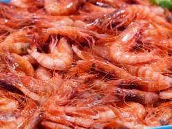 Spanien-Palamos-Fischmarkt-Garnelen-4