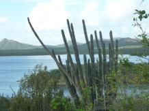 Bonaire-Gotomeer-3