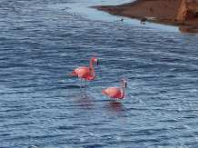 Bonaire-Gotomeer-Flamingo-2