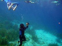 Bonaire-Schnorcheln-Unterwasserwelt-1