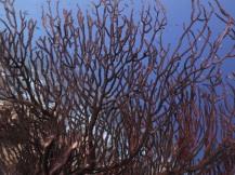 Bonaire-Schnorcheln-Unterwasserwelt-10