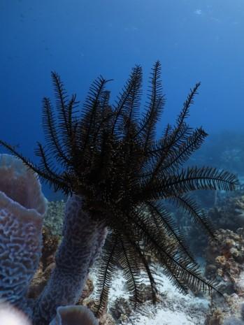 Bonaire-Schnorcheln-Unterwasserwelt-15