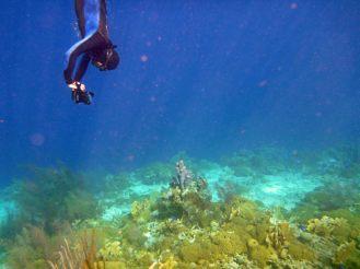 Bonaire-Schnorcheln-Unterwasserwelt-2
