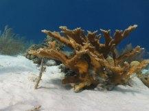 Bonaire-Schnorcheln-Unterwasserwelt-3