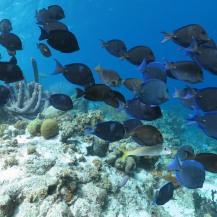 Bonaire-Schnorcheln-Unterwasserwelt-5
