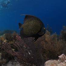 Bonaire-Schnorcheln-Unterwasserwelt-6