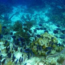 Bonaire-Schnorcheln-Unterwasserwelt-8
