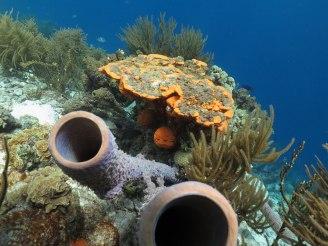 Bonaire-Schnorcheln-Unterwasserwelt-9