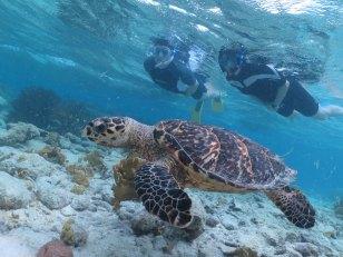 Bonaire-Schnorcheln-Unterwasserwelt-Schildkroete-3