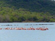 Curacao-Flamingos-1