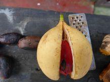 Grenada-Muskasnuss-3