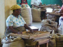 Grenada-Muskatnuss_Fabrik-4