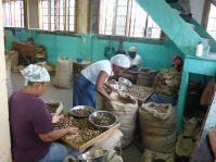 Grenada-Muskatnuss_Fabrik-8