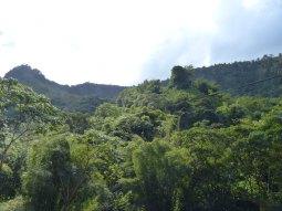 Grenada-Regenwald-1