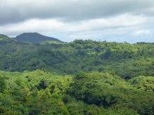 Grenada-Regenwald-2