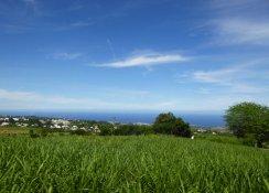 La_Reunion-Fahrt_zu_Le_Maido-Zuckerrohr-1