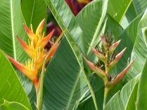 La_Reunion-Pflanze-Blume-1