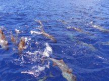 Delfine an der Westküste