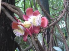 Mahé - Botanischer Garten