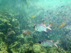 Schnorcheln im Ste Anne Marine Nationalpark