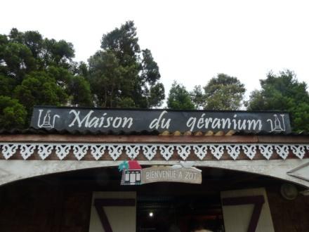 La_Reunion-Geranium-1