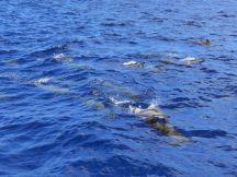 Mauritius-Katamaran_Tour-Westkueste-Delfine-2