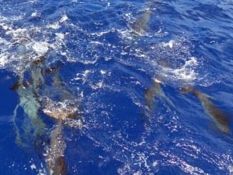 Mauritius-Katamaran_Tour-Westkueste-Delfine-4