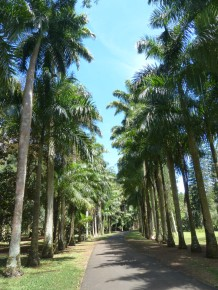 Mauritius-Pamplemousse_Garden-3
