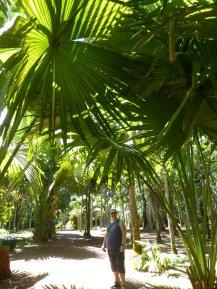 Mauritius-Pamplemousse_Garden-4
