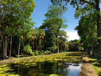 Mauritius-Pamplemousse_Garden-Seerosen-2