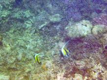Mauritius-Westkueste-Schnorcheln-3
