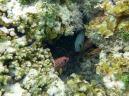 Seychellen-La_Digue-Anse_Source_d_Argent-Fische-3